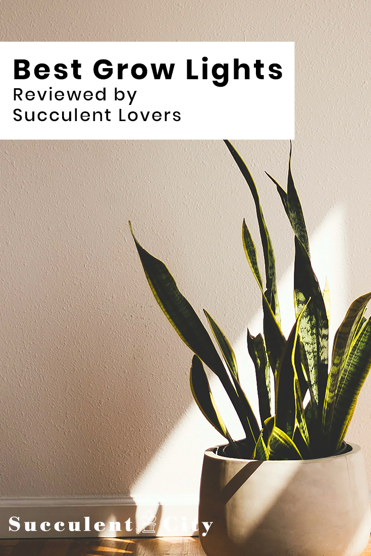 Best Grow Lights Reviewed by Succulent Lovers