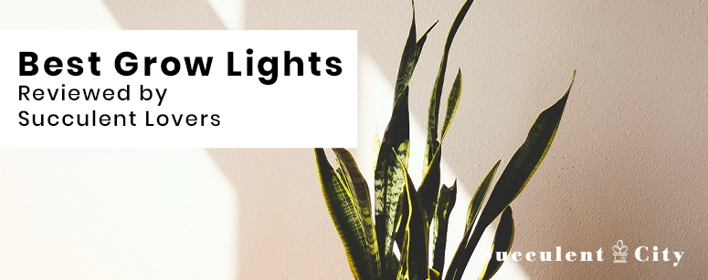 Top Grow Lights for Succulents
