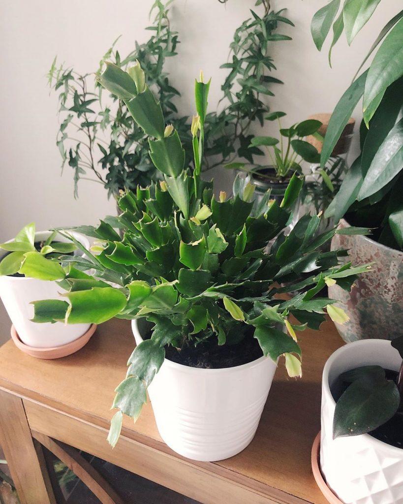 7 Best Succulents For Low Light Environments Succulent City