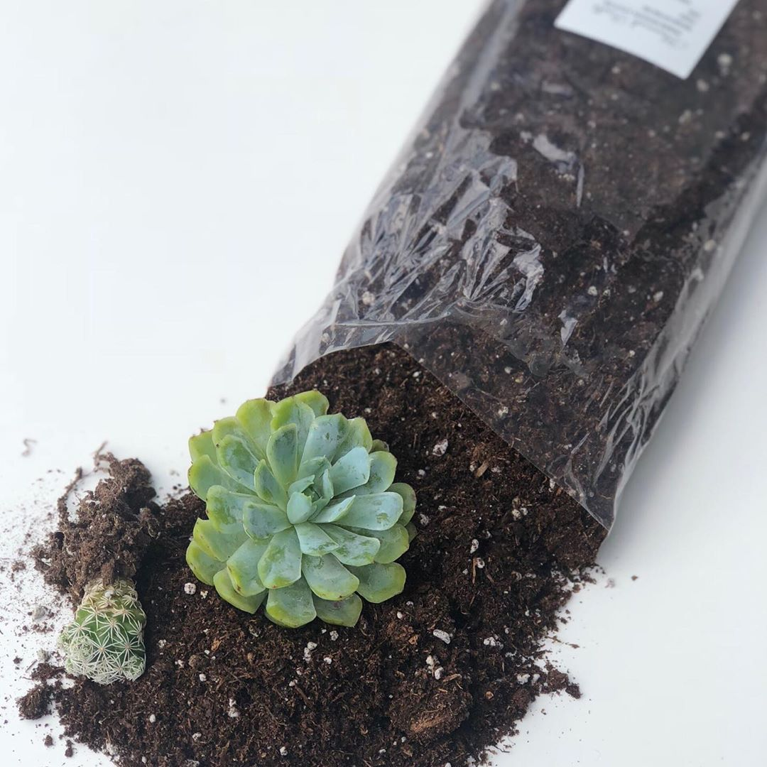how to make your own succulent soil at home