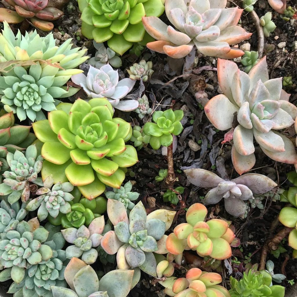 how to make succulent soil at home