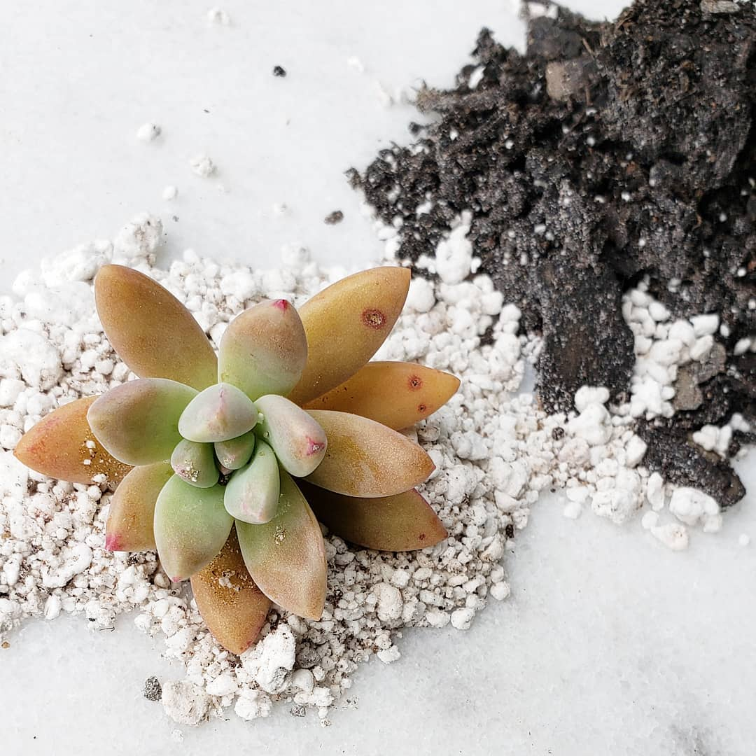 Make Your Own Succulent Soil