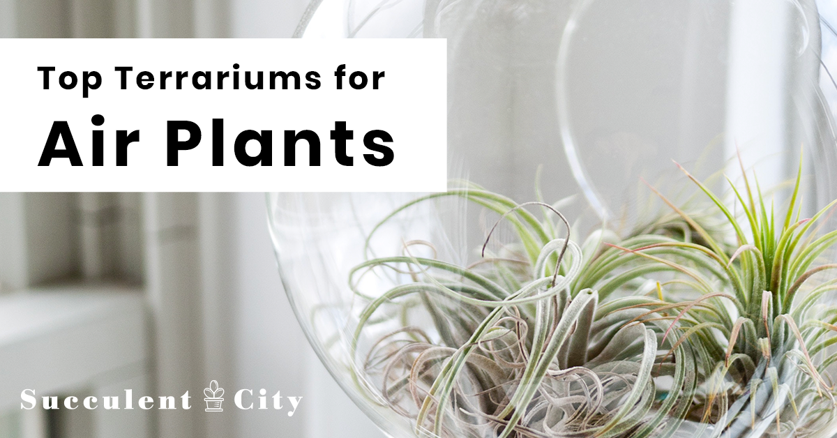 Top Terrariums For Air Plants Different Types Of Planters