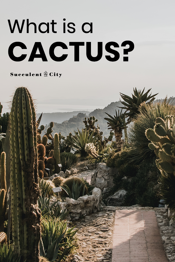 What is a Cactus Plant?