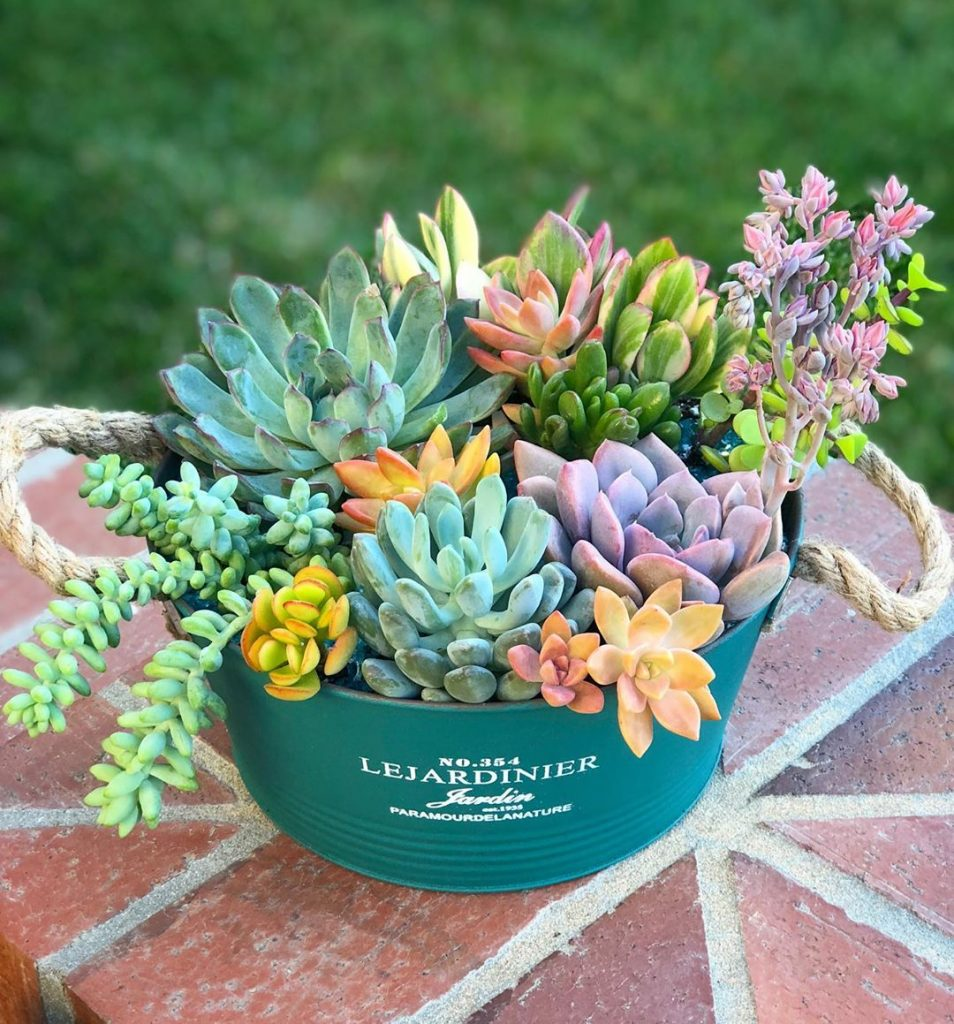 5 Tips on Saving Dying Succulents