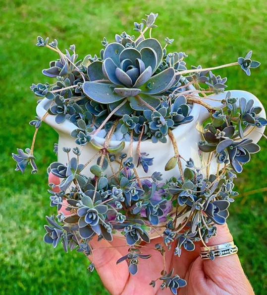 How to trim your Succulent