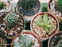 10 Cute Mini Succulents for Indoors