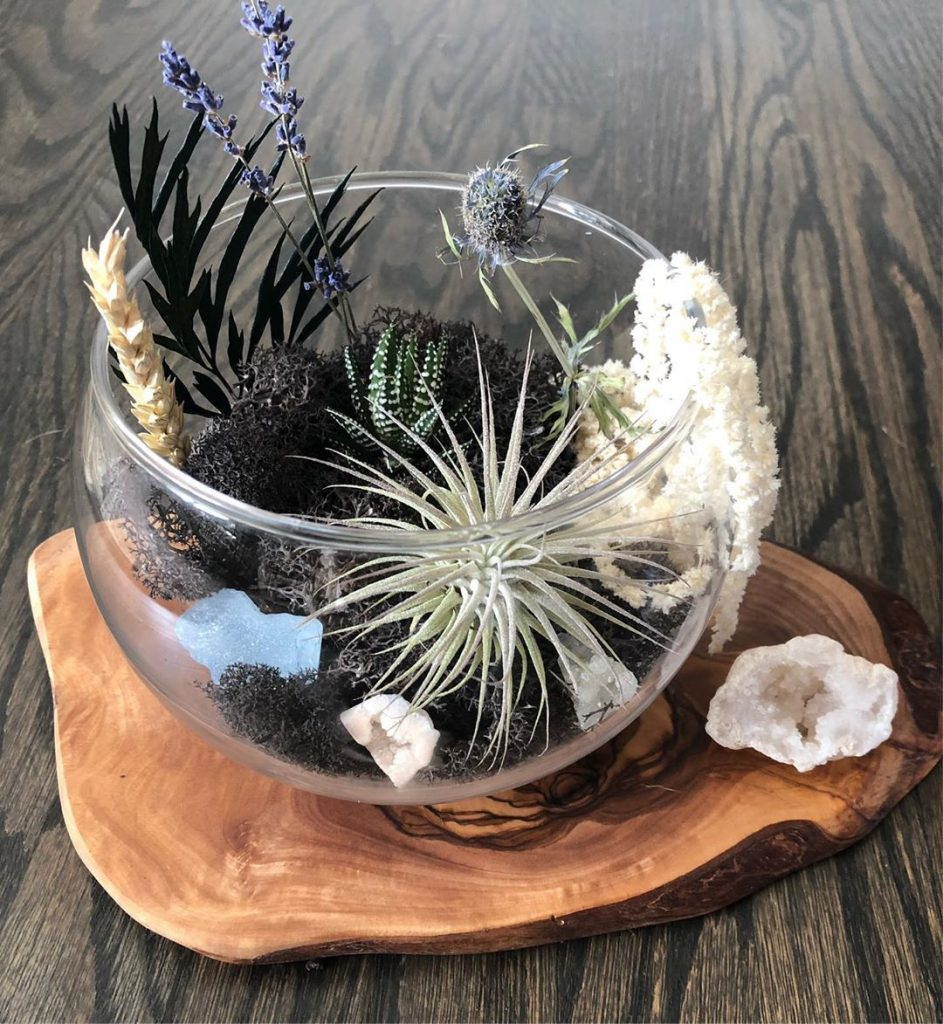 5 Types of Air Plants