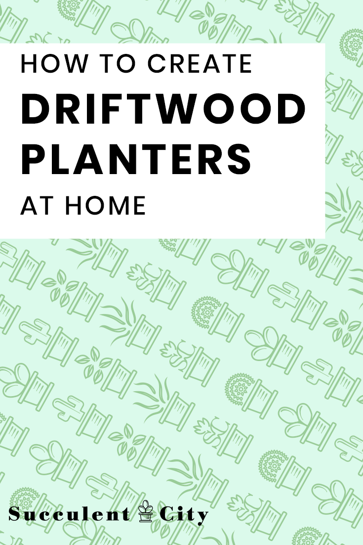 How to Easily Create Driftwood Planters at Home (DIY)