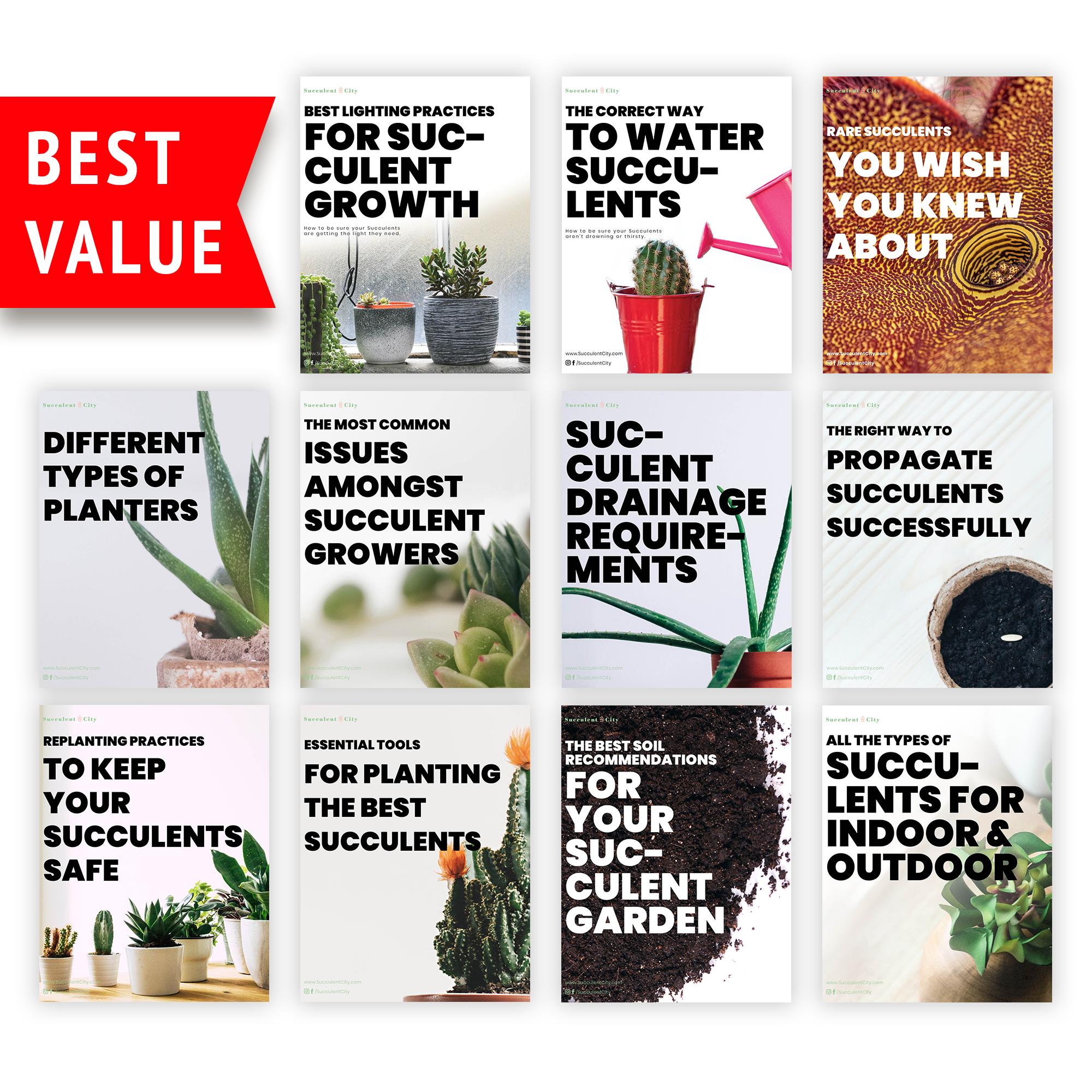 Succulent Ebooks For Free   Bundle
