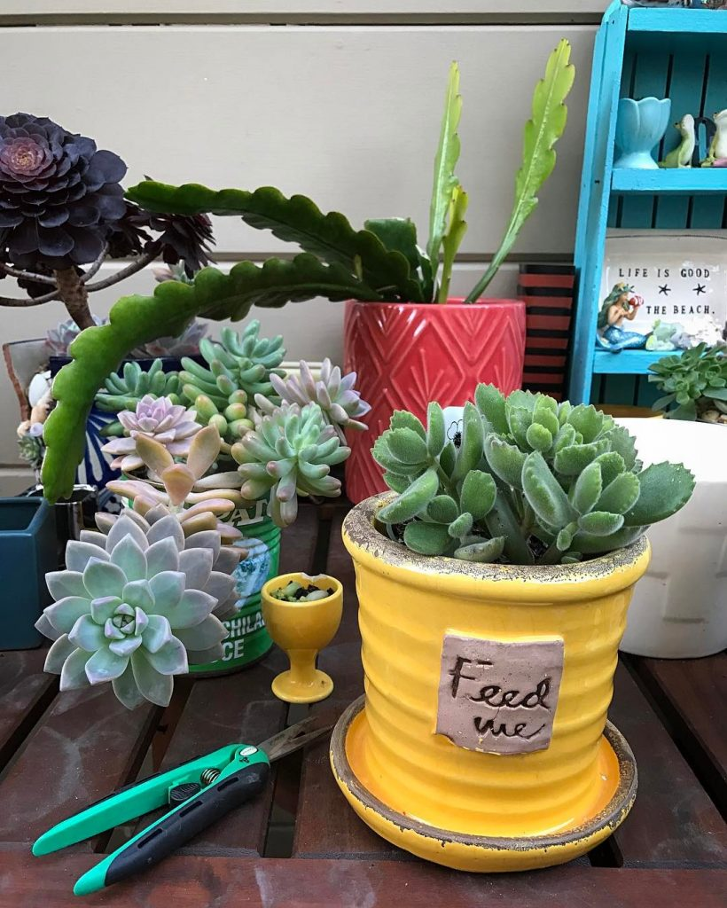 Best Gardening Tools for Succulents