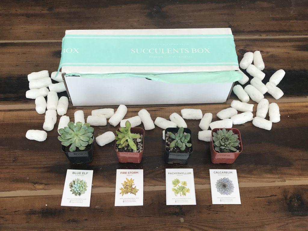 Succulents Box Review