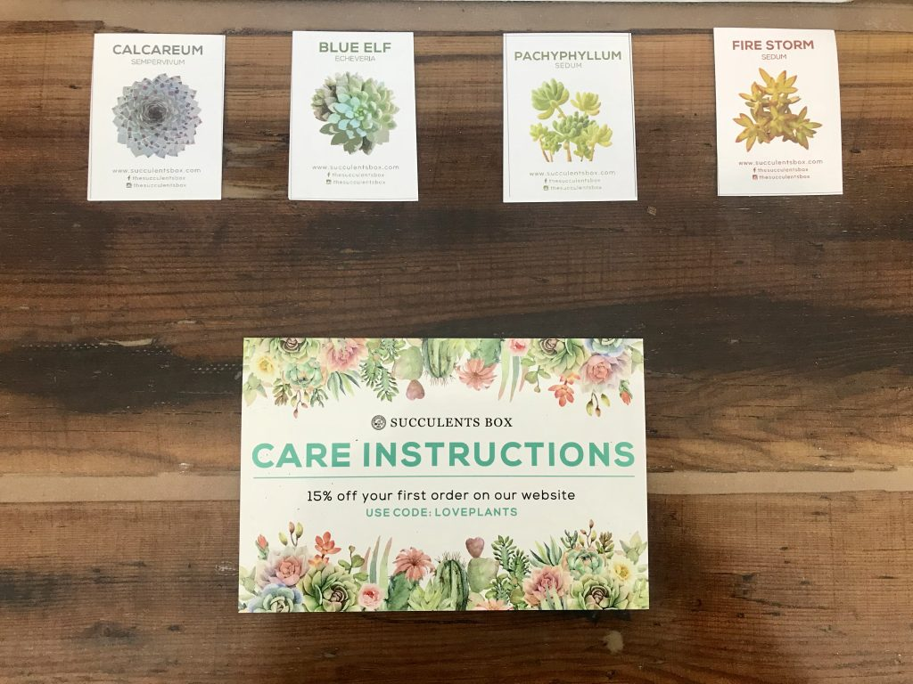 Succulents Box Review