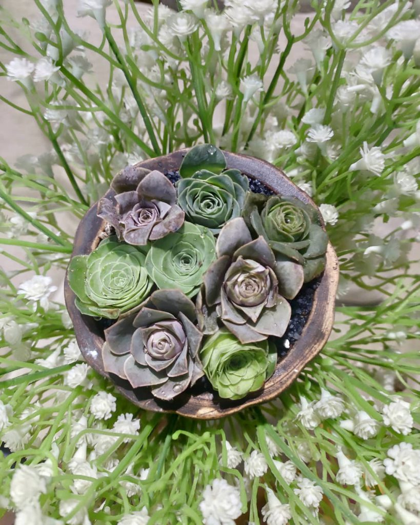 7 Succulent Bouquets You Wish You Knew About
