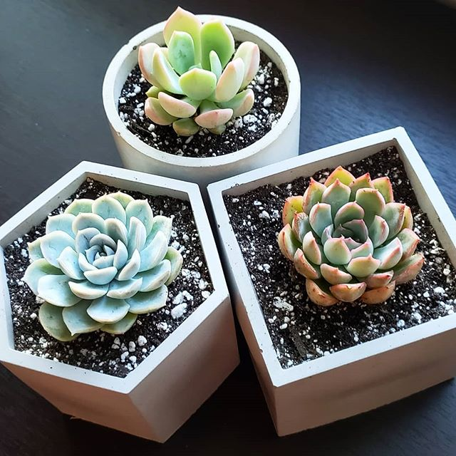 Are Grow Lights Bad for My Succulents