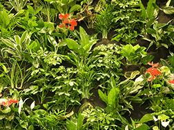 How Big Do Air Plants Grow