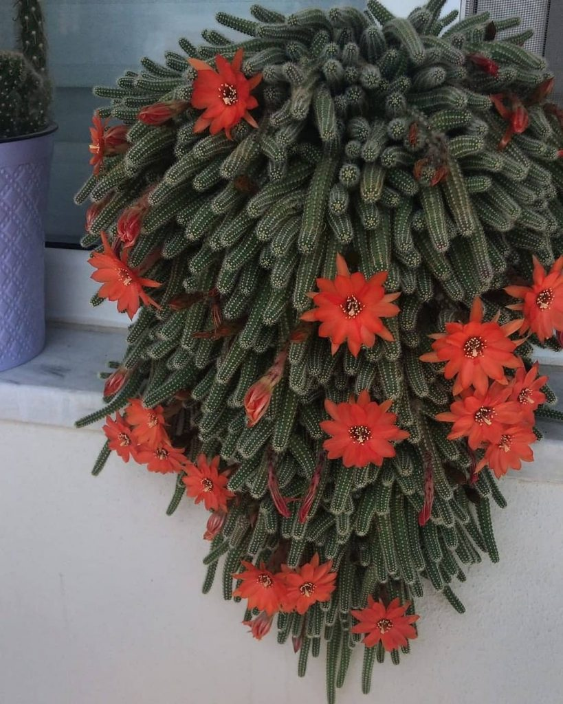 How Often To Water Cactus