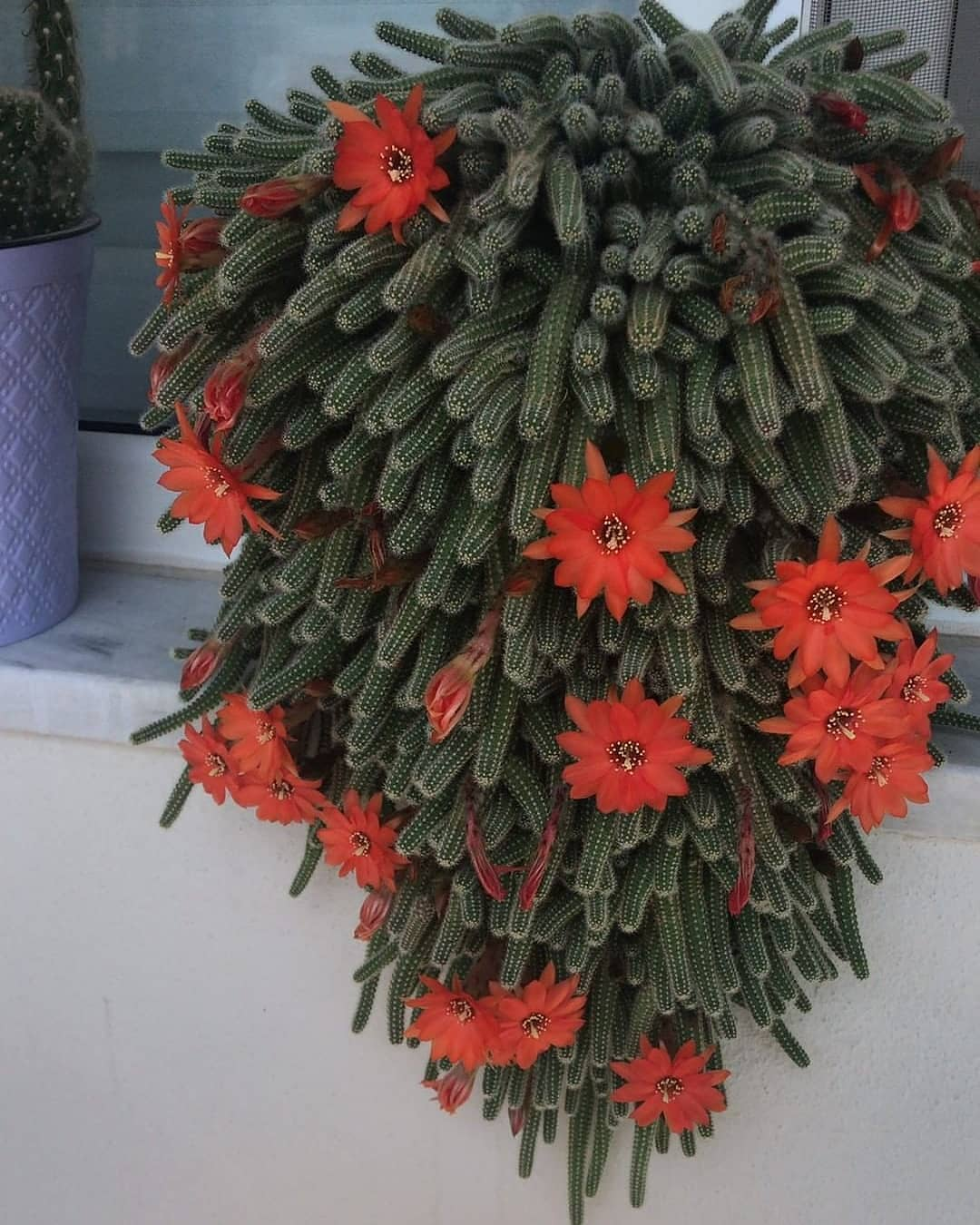 How Often To Water Cactus