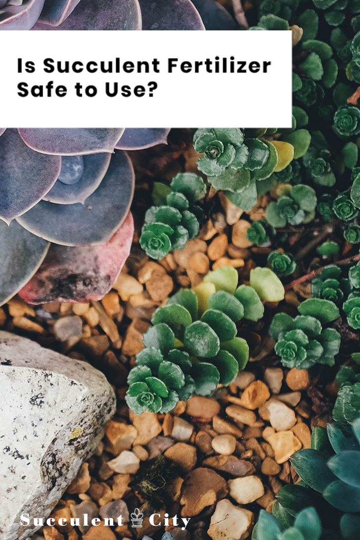 Is Succulent Fertilizer Safe to Use?/Everything You Need To Know