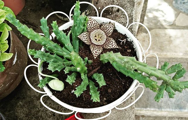 Is Succulent Fertilizer Safe to Use