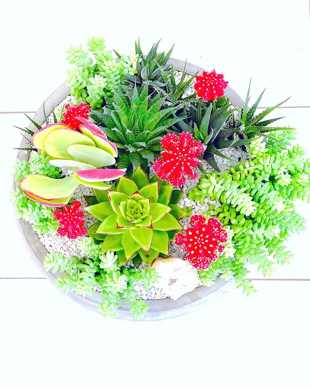 Best Succulent Arrangements You Have to See
