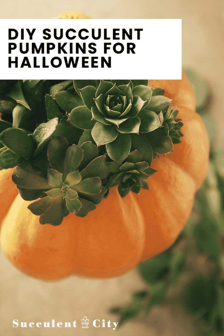 DIY Succulent Pumpkins for Halloween/The Beauty Hacks Tips