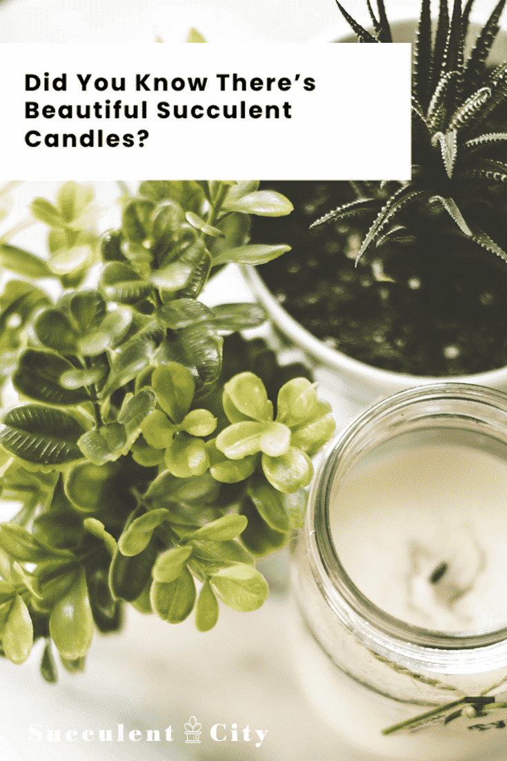 Did You Know There's Beautiful Succulent Candles?