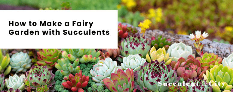 How to Make a Fairy Garden with Succulents