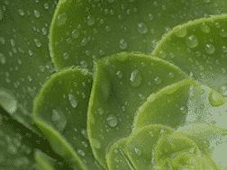 Overwaterd Succulent Remedies