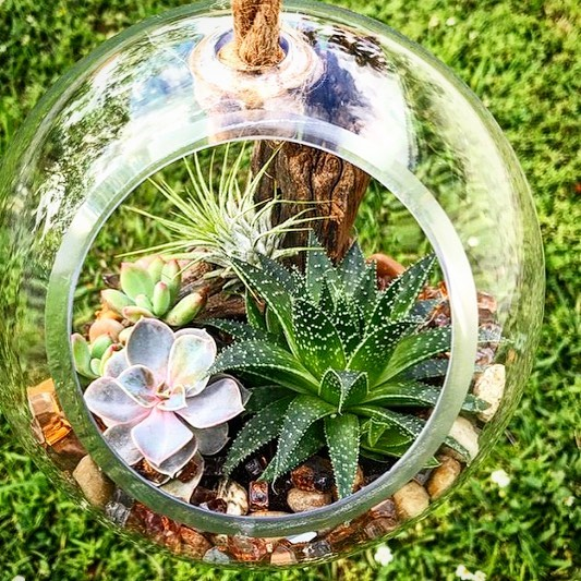 Top 8 Succulent Terrariums
