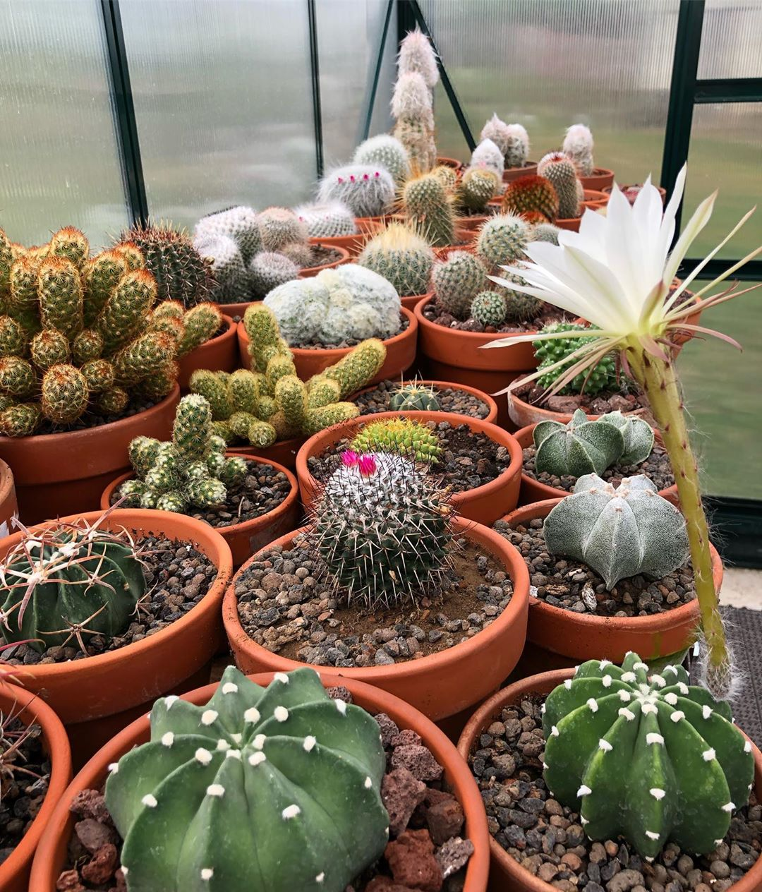 What Is Special About A Cactus?