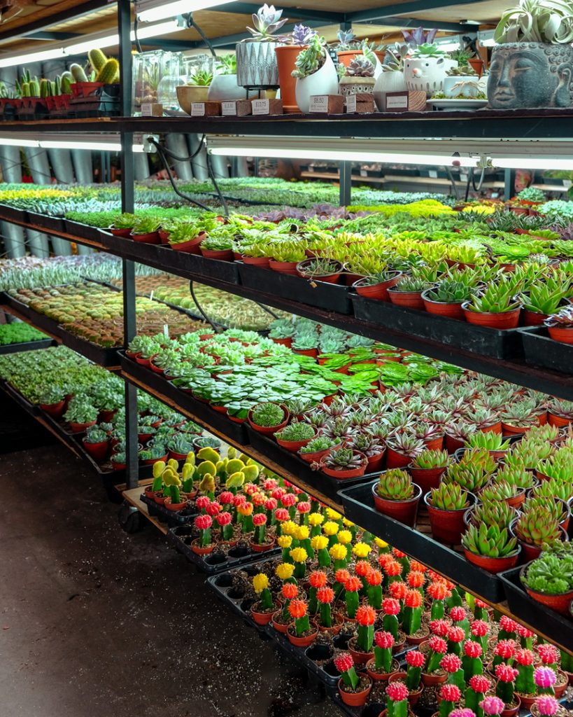 Succulent and Cacti Stores Near Me