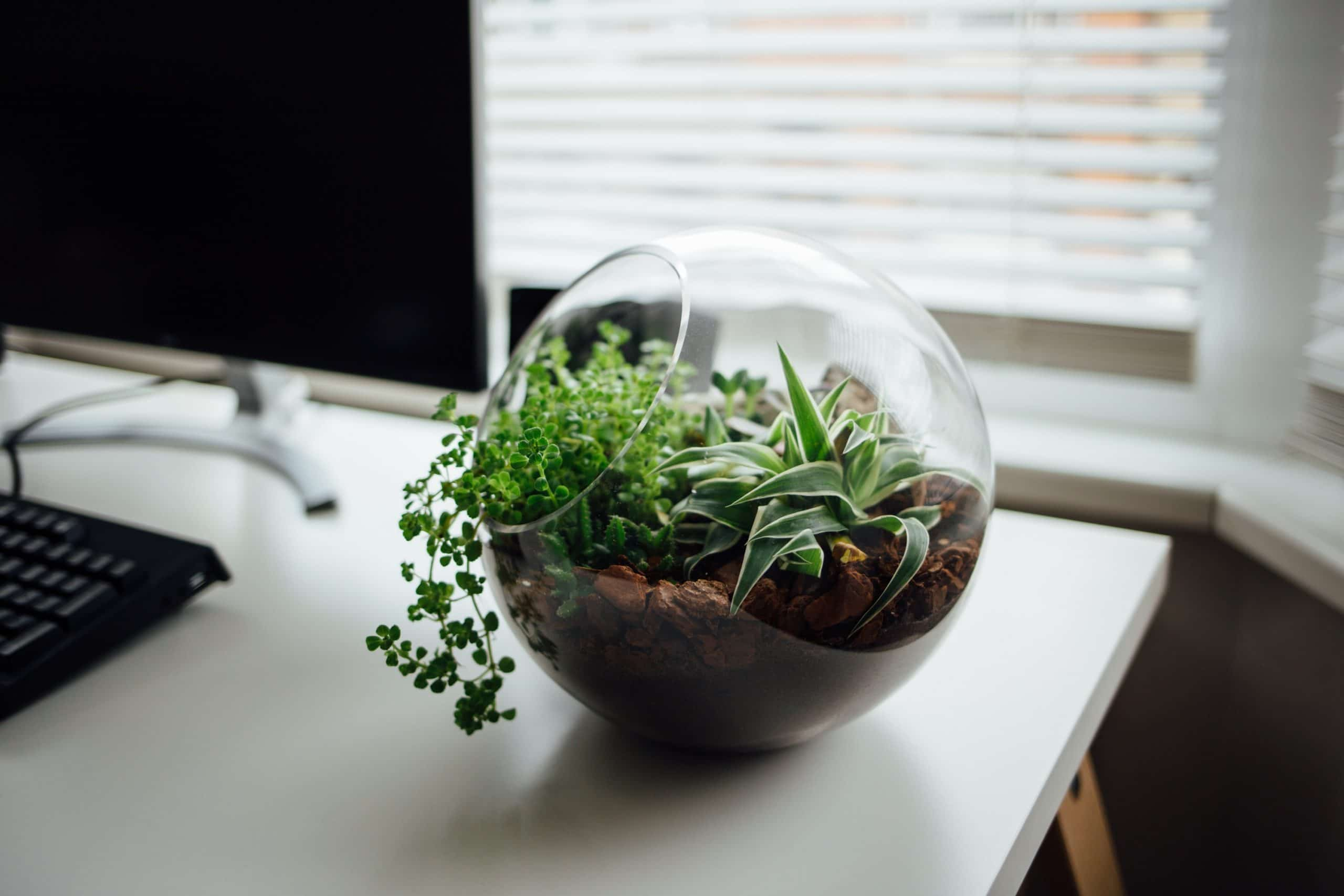 Things to Consider Before Making a Succulent Terrarium