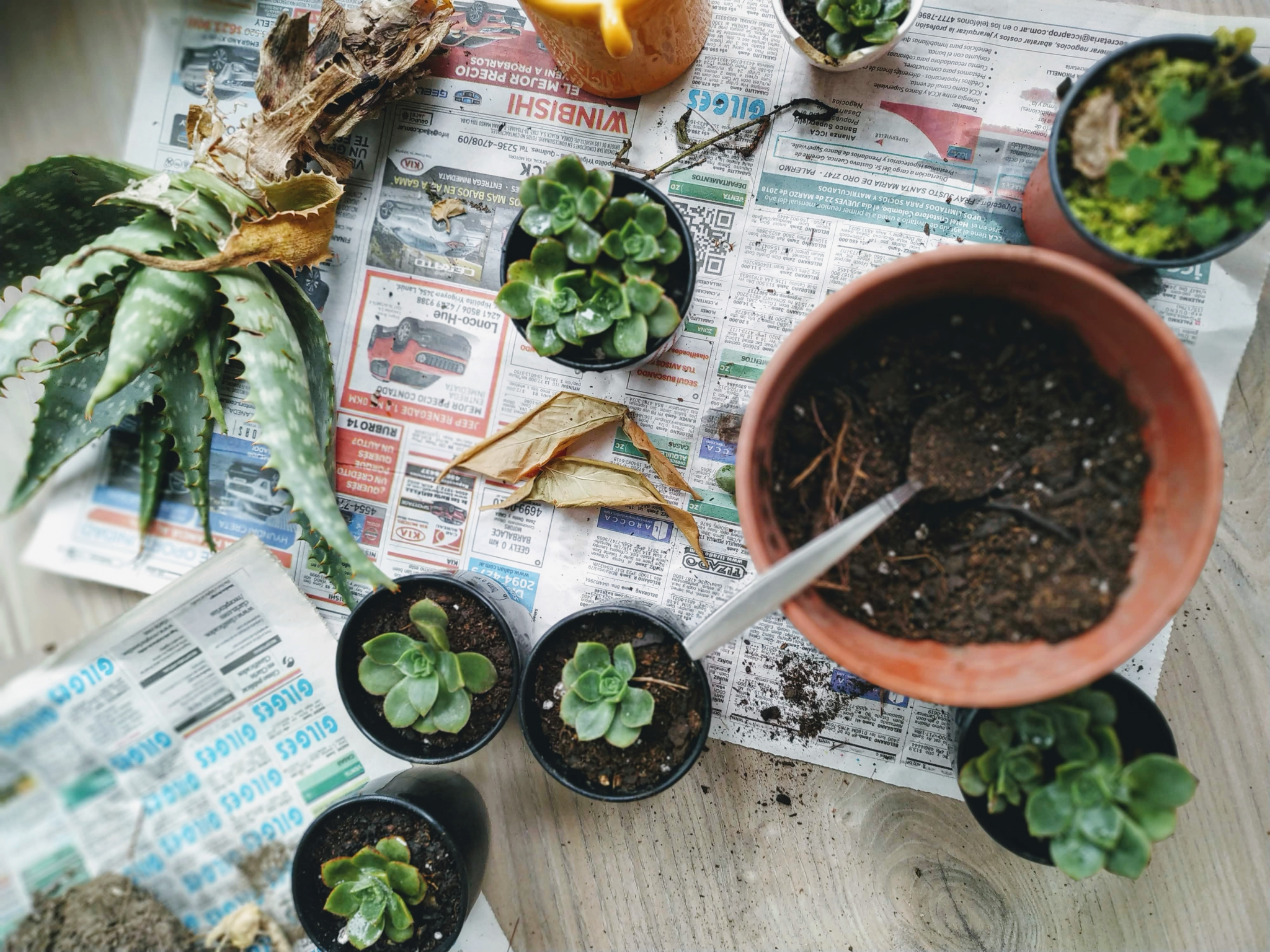 4 Reasons Why Specialized Succulent Soil is the Best for Growing Succulents