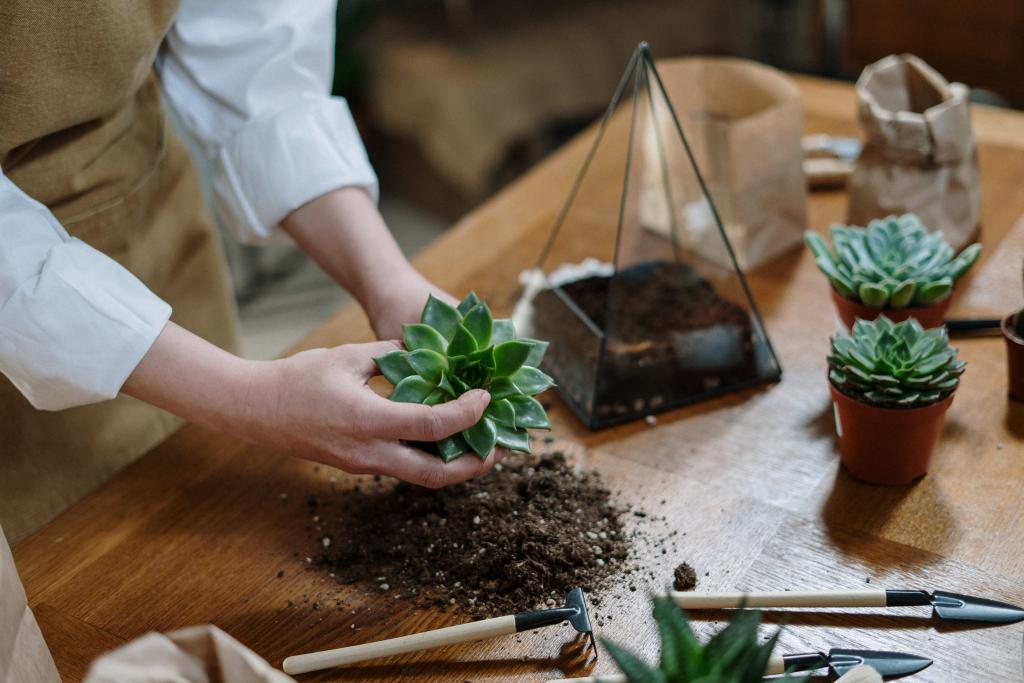 Succulent Potting Mix DIY
