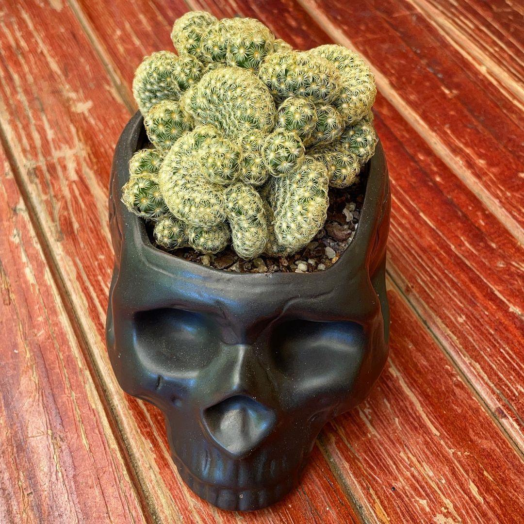 Brain Cactus-SC