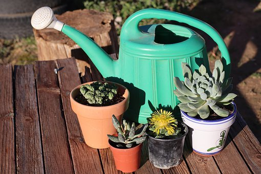 When Can I Plant Succulents Outside in the Spring