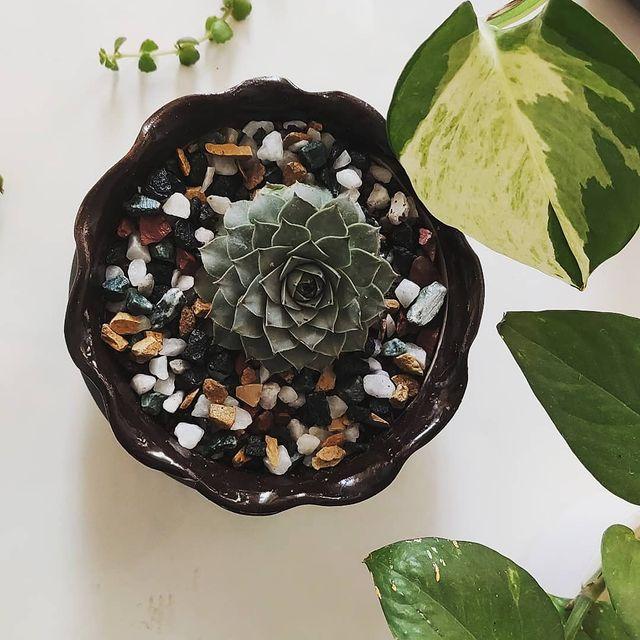 Succulent soil types-Choosing the right soil for succulents-SC