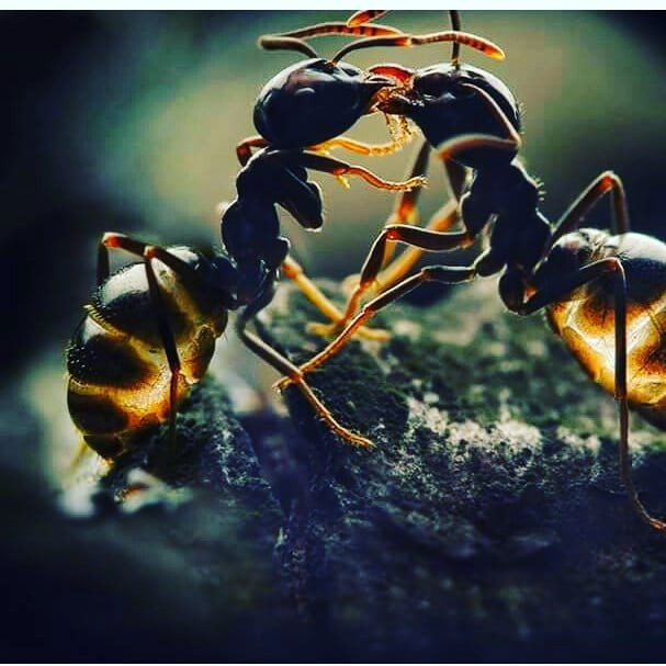 Ants in Succulent Soil-How to Get Rid of Ants in Succulent Soil-Use of Antbaits-SC