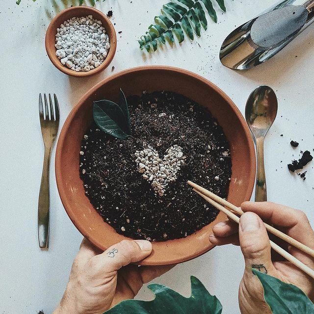Succulent soil types-SC