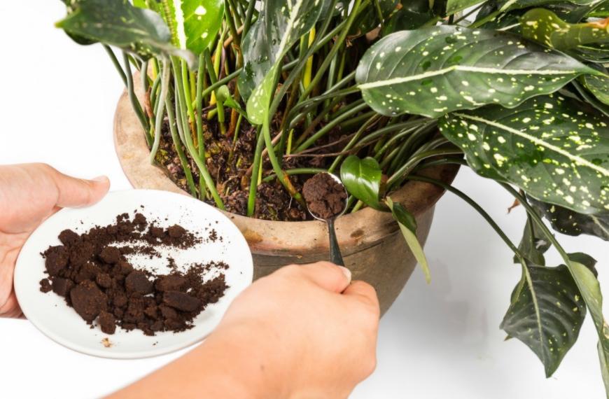 Succulent soil types-Excessive Nutrients in Succulent Soil-SC