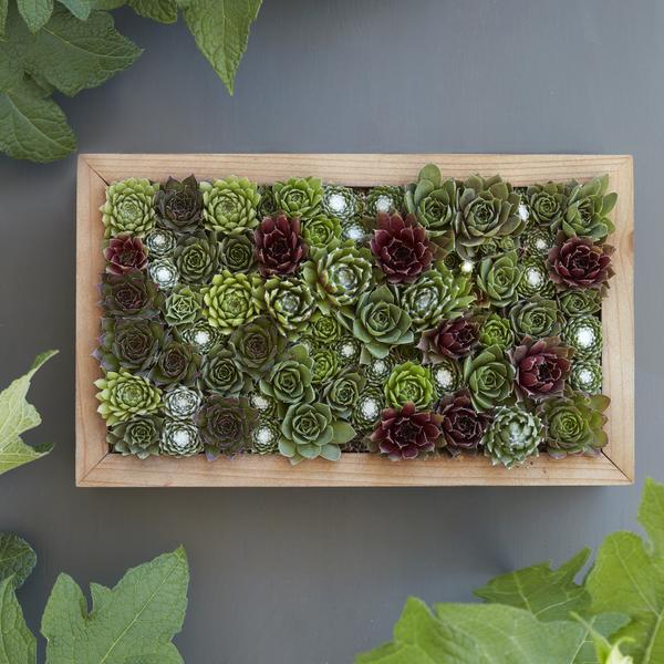 succulent vertical wall garden