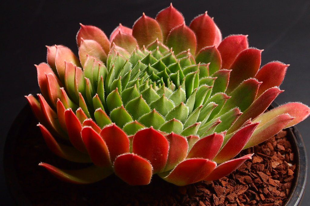 succulents with honey